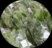 道の駅とよとみの新鮮な野菜ほうれん草