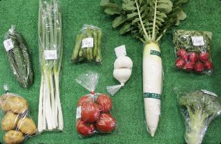 新鮮な朝採り野菜